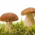 Mushroom Effect