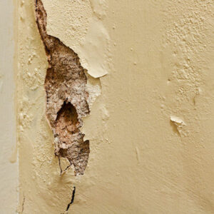 How To: Diagnose Common Plaster Problems