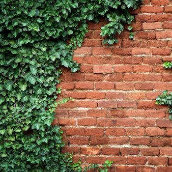 Protecting Your House From Your Landscaping