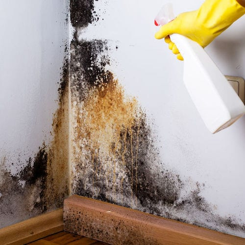How To Get Rid Of Mold And Mildew The Craftsman Blog