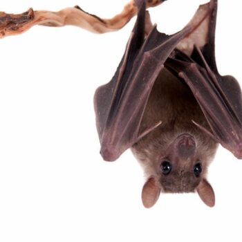 How To: Get Rid of Bats