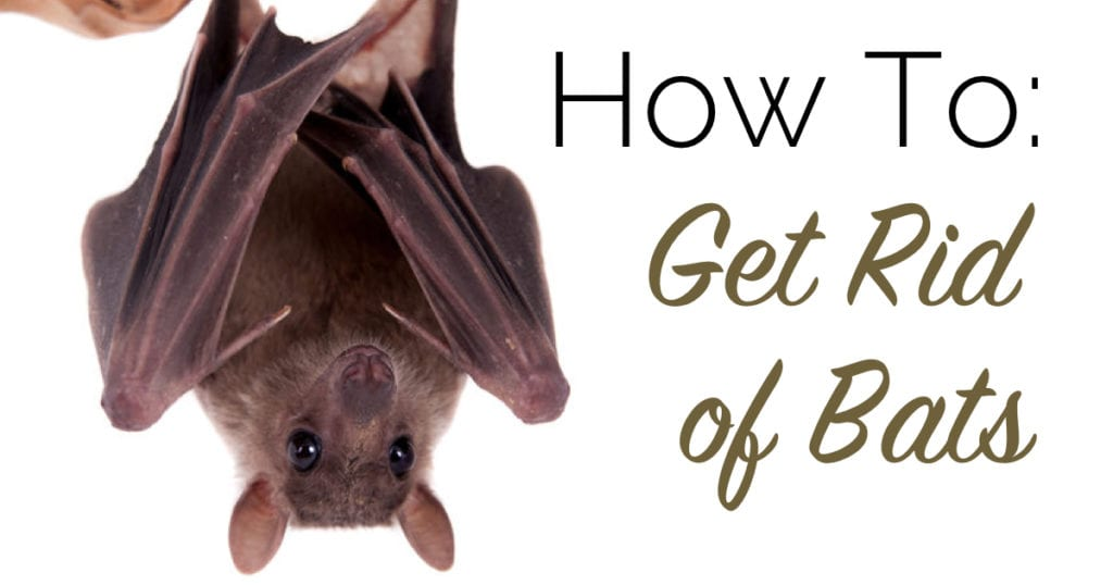 How To: Get Rid of Bats | The Craftsman Blog