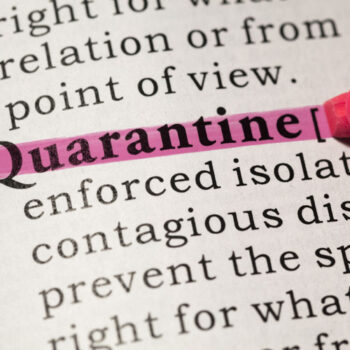 6 Home Projects to Do While Quarantined