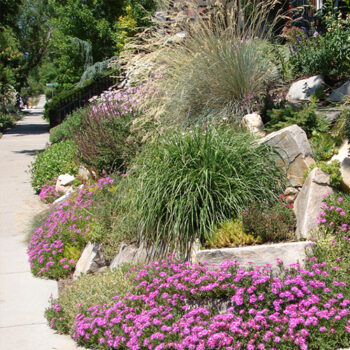 What is Xeriscaping